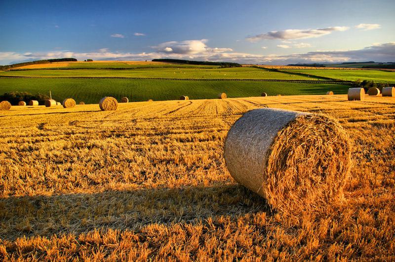 "Agricoltura, Sabatini: ""Dopo gelate, bene fondi per danni siccità"""